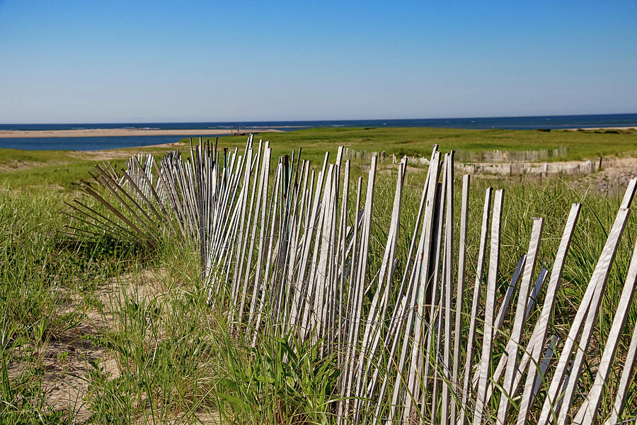 Lighthouse Beach Fence Line by Marisa Geraghty Photography