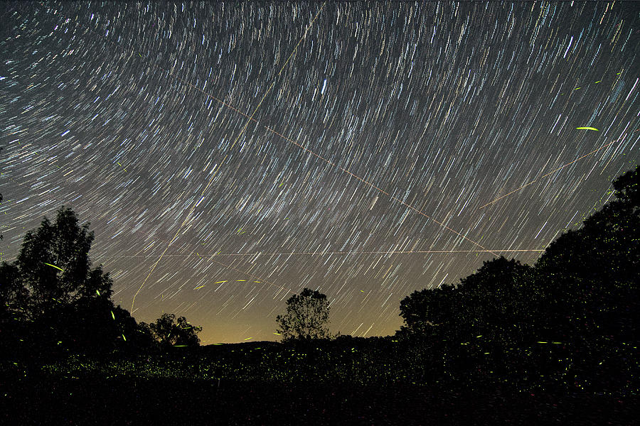 Lightning Bugs And Star Trails Photograph