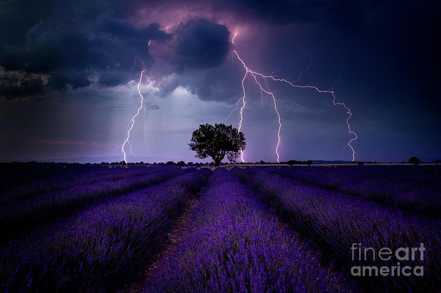 Lightning Lavender by Tim Shields