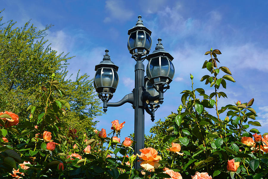 Lights And Roses by Glenn McCarthy Art and Photography