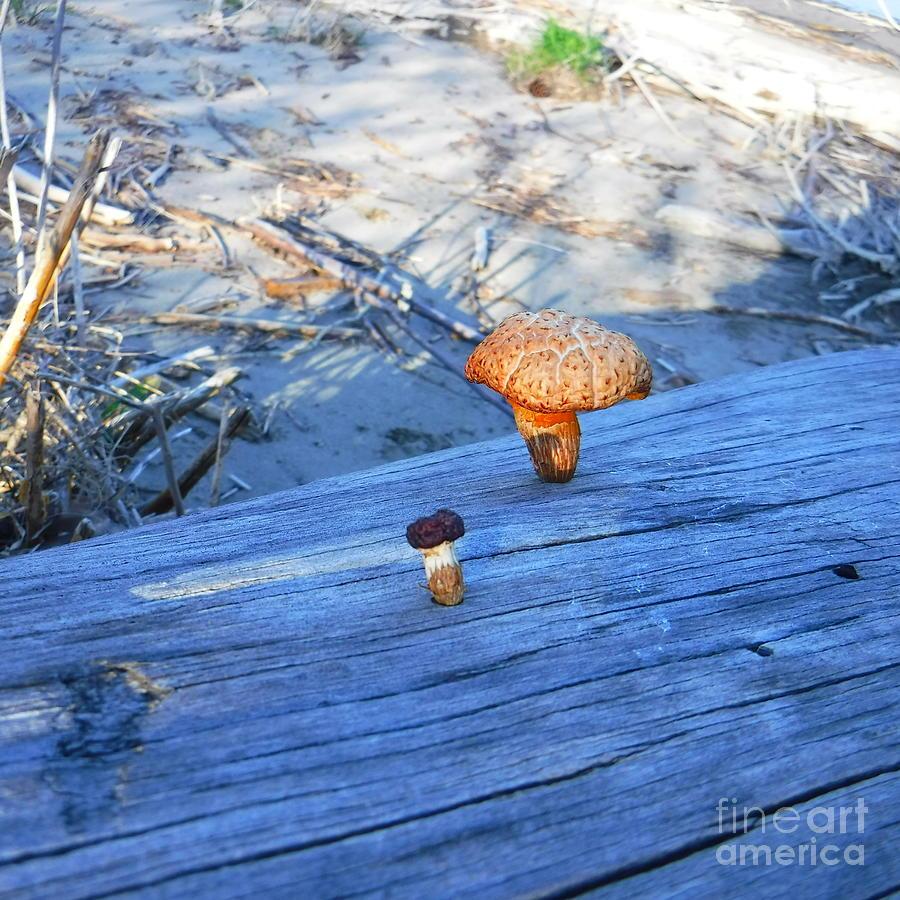 Fungus Photograph - Like Father Like Son by YHWHY Vance