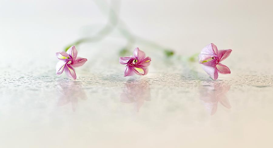 Lilac Flowers On Dewdrops Mixed Media