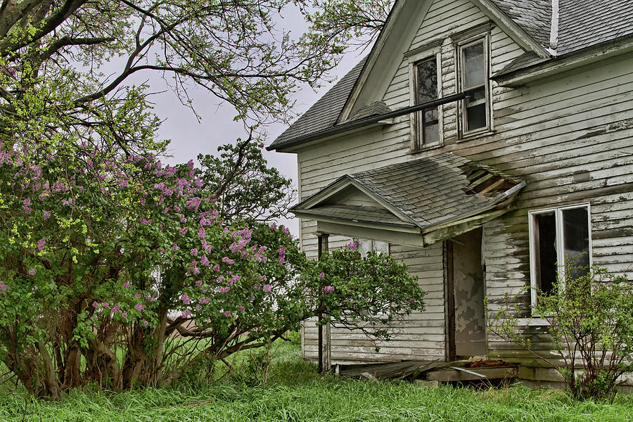 Lilacs Remember Photograph