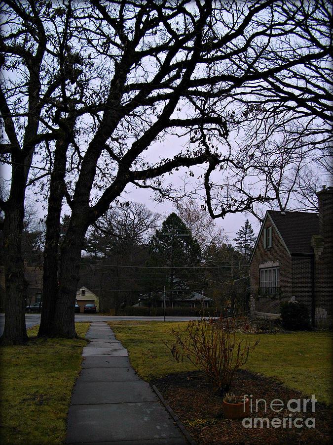 Limbs and Lines - Neighborhood Tree by Frank J Casella