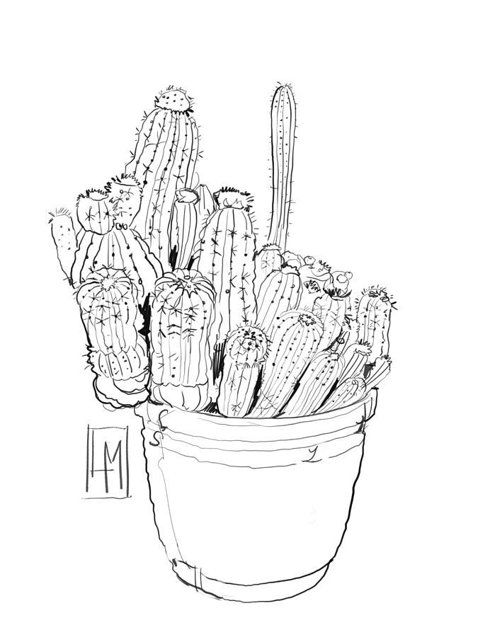 Line Drawing Of A Pot Of Cactus Drawing