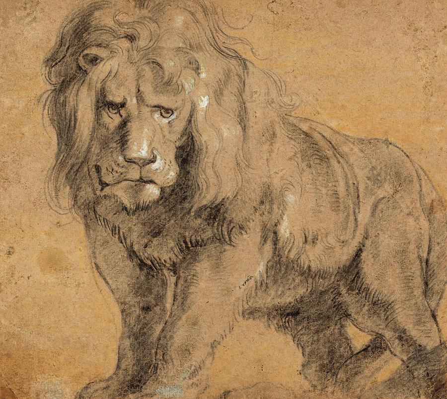 Sir Peter Paul Rubens Painting - Lion, 1613 by Peter Paul Rubens