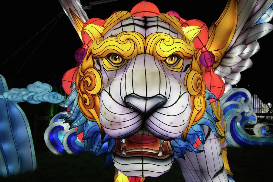 Lion Lights by Martin Newman