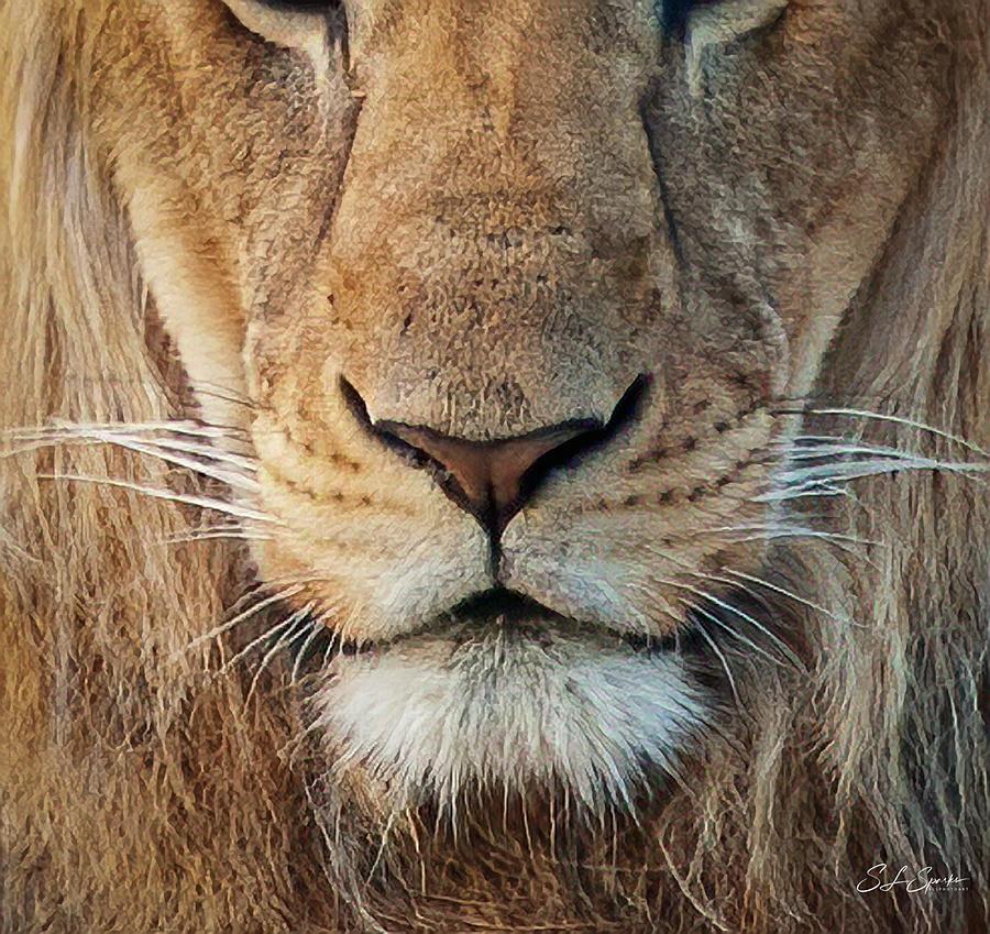 Lion Photograph - Lion by Steven Sparks