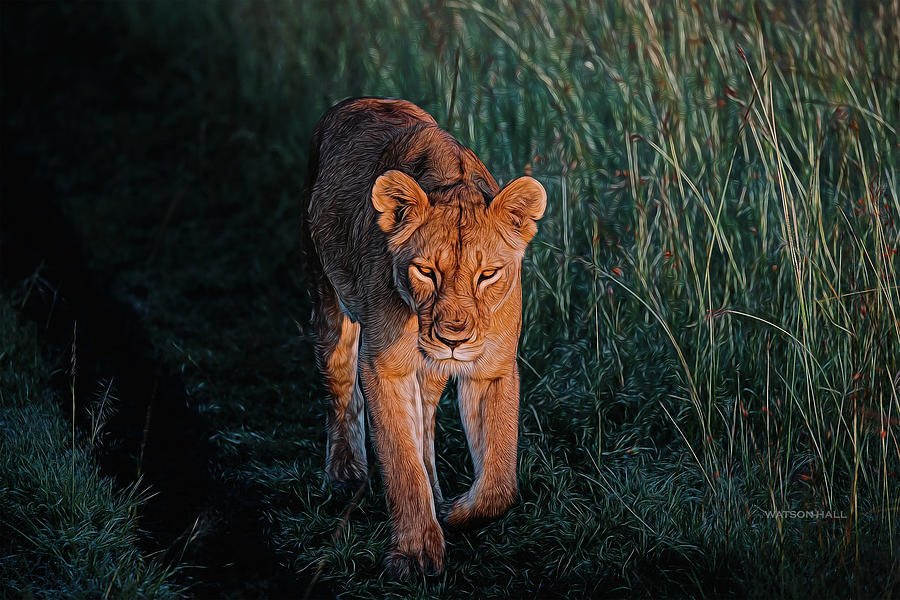 Lioness On The Move Digital Art