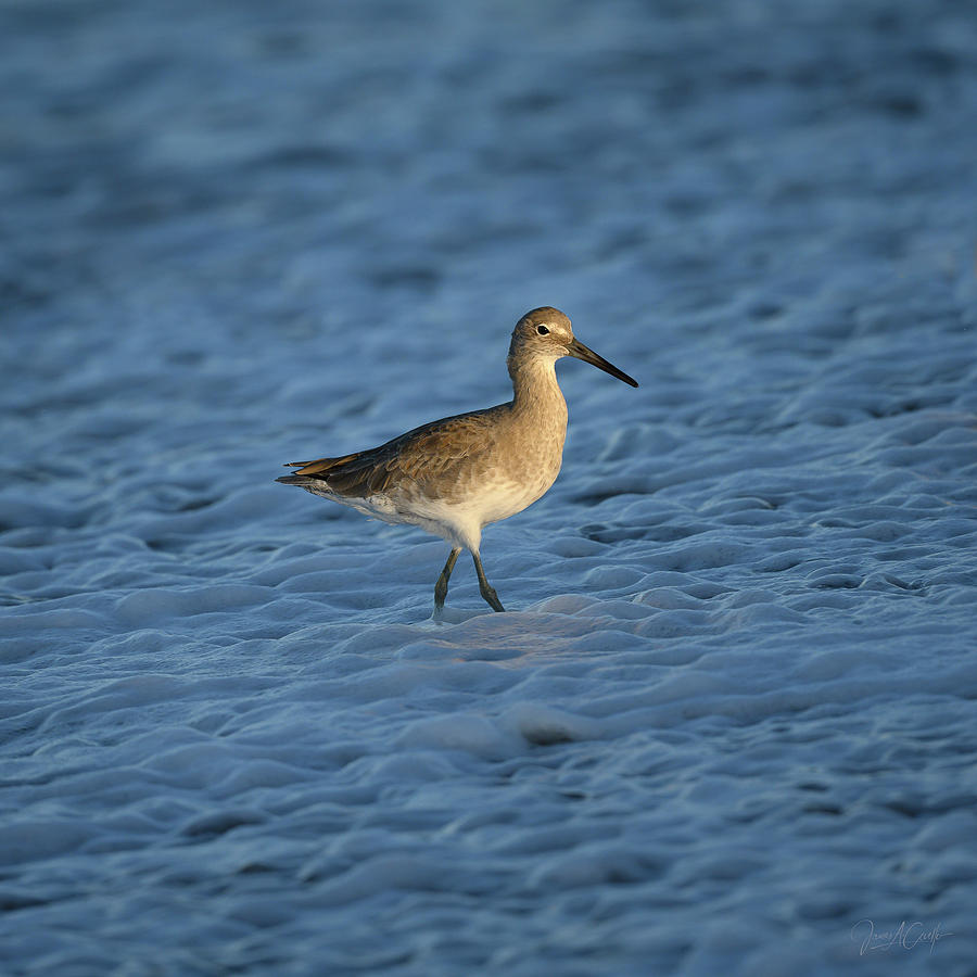 Lit Willet by James Covello