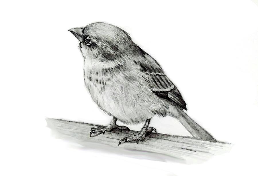Little Bird In Pencil Drawing