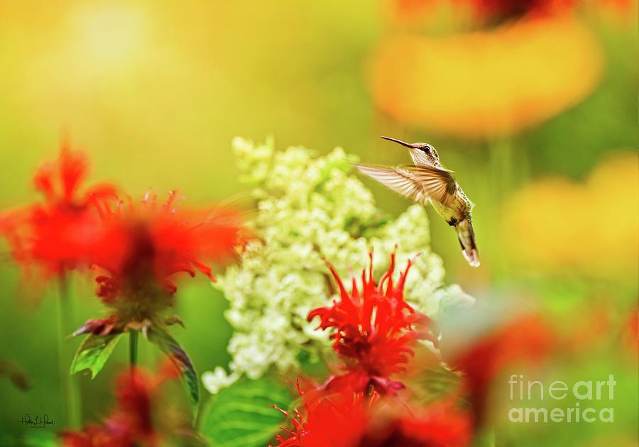 Little Hummer Photograph by Heather Hubbard