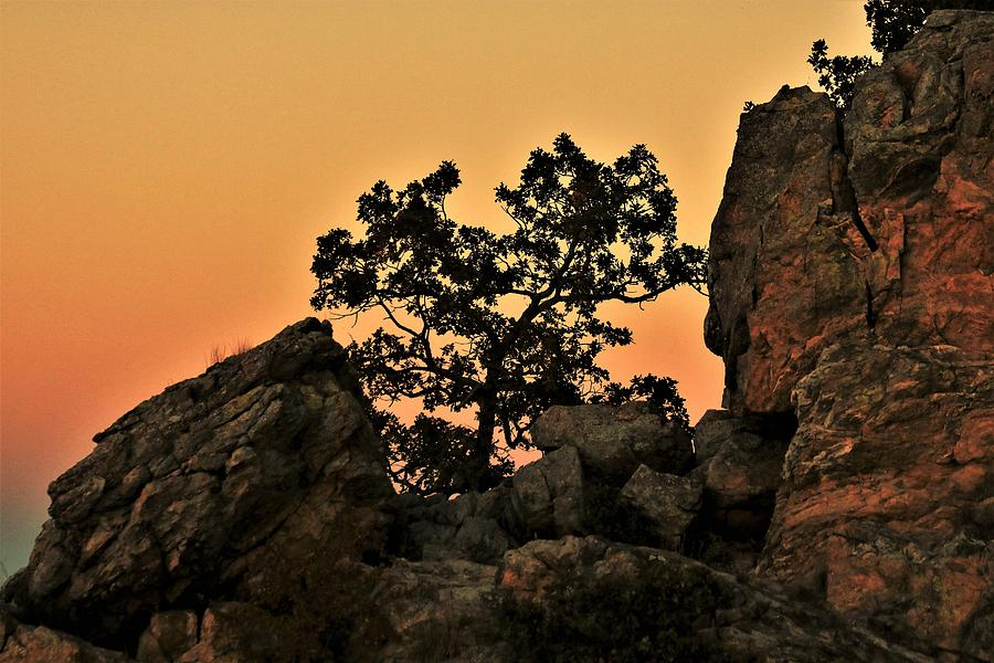 Little Oak Tree on Cliff at Sunset by Sheila Brown