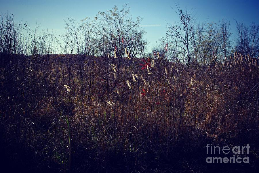 Landscape Photograph - Little Red in the Prairie by Frank J Casella