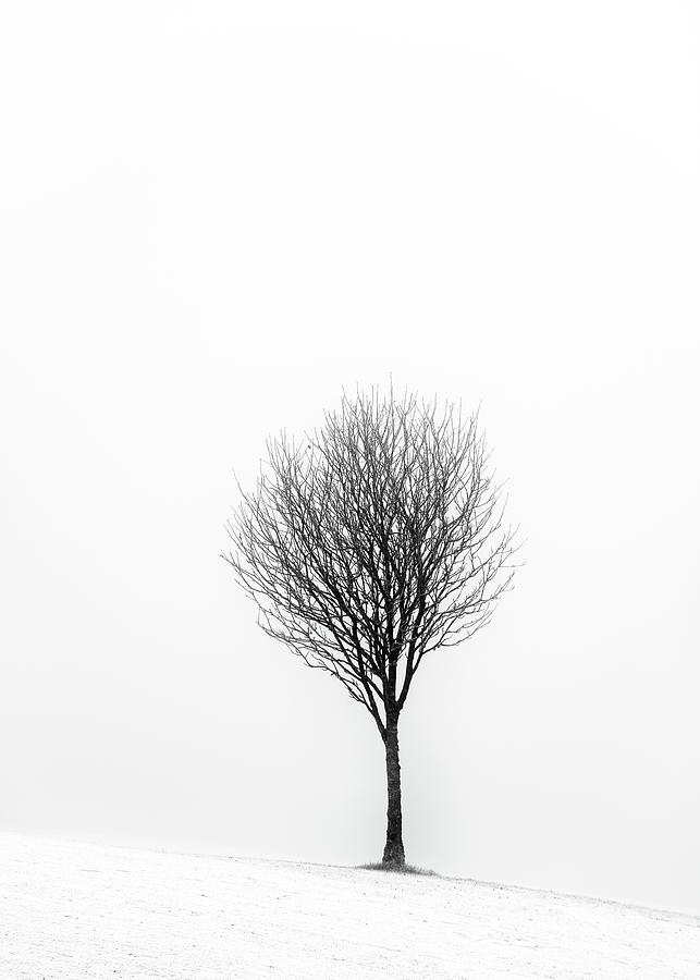 Tree Photograph - Little Tree by Grant Glendinning