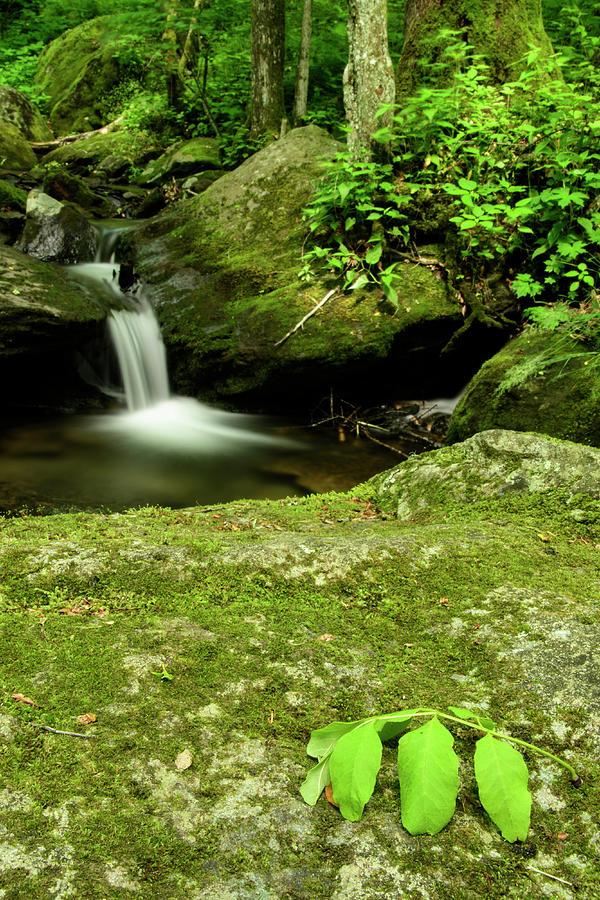 Blue Ridge Mountains Photograph - Little Waterfall by Melissa Southern