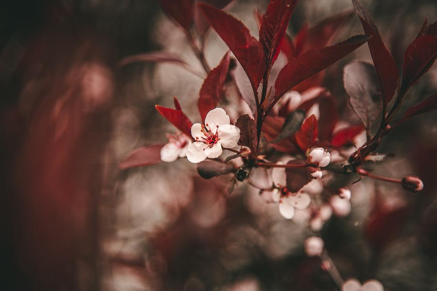 Little White Blossoms by Floral Art