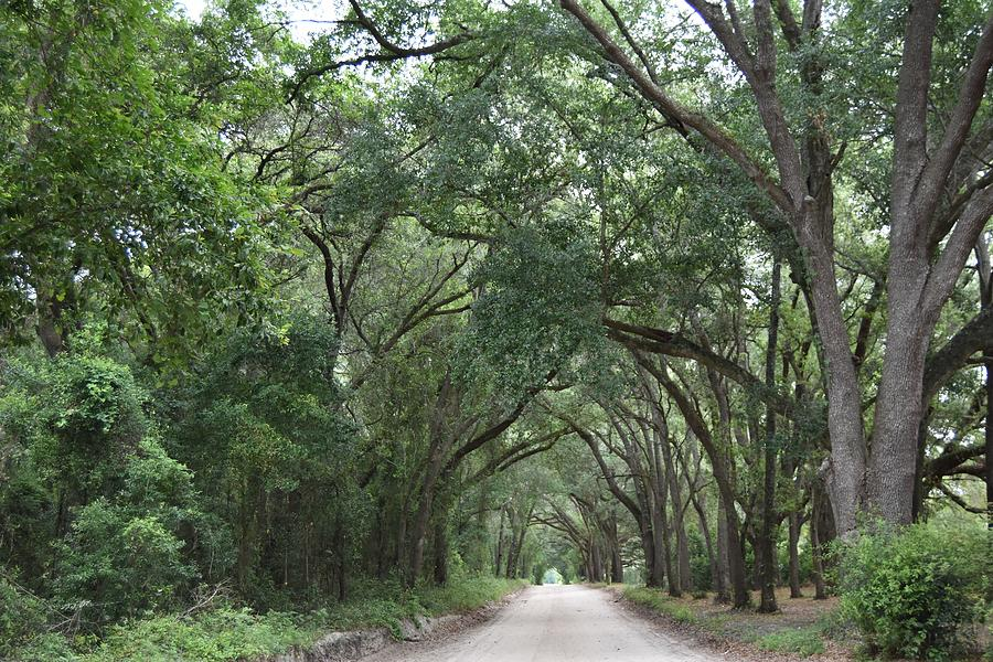 Live Oak Tree Guardians Photograph