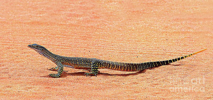 Lizard In The Wild By Kaye Menner Photograph