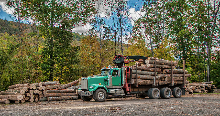 Logging Photograph