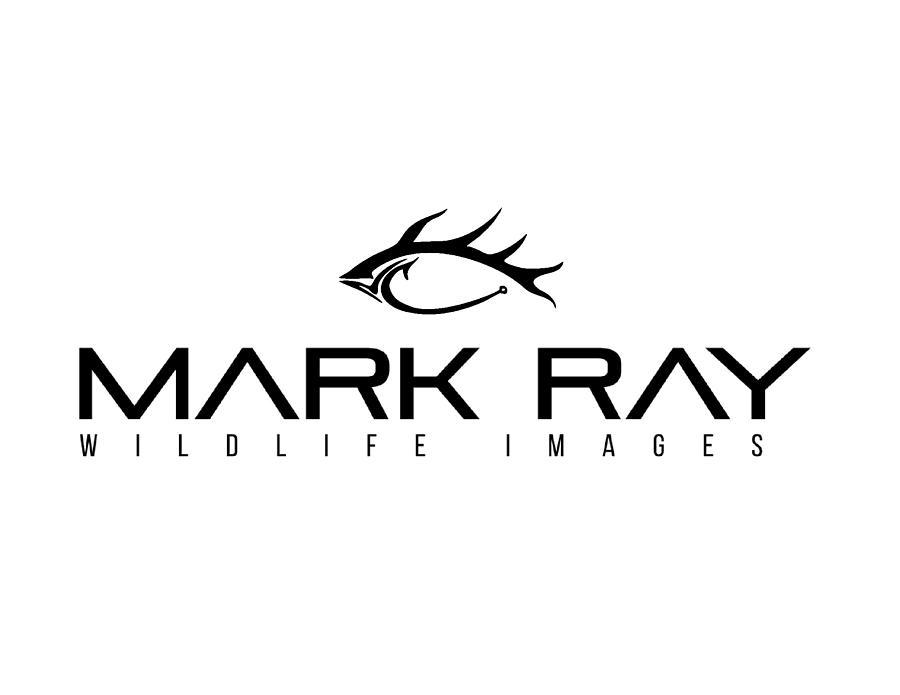 Mark Ray Logo Mug by Mark Ray