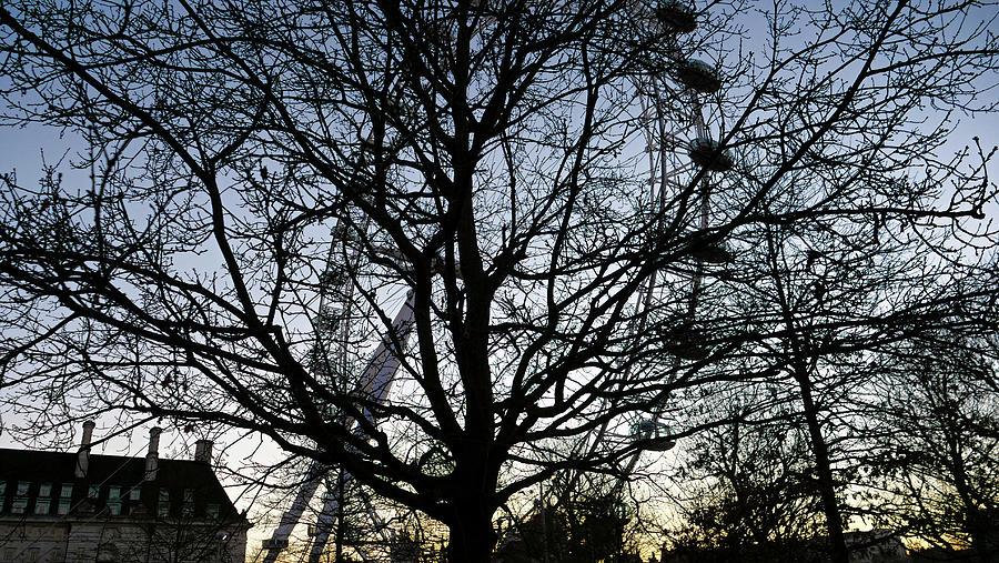London Eye view thru trees near it by Santosh Puthran