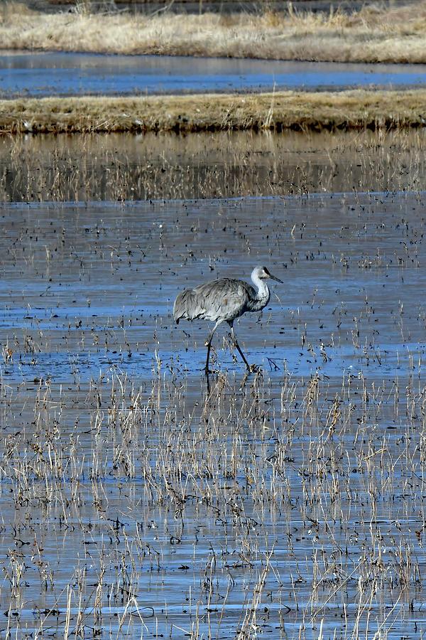 Lone Crane Photograph