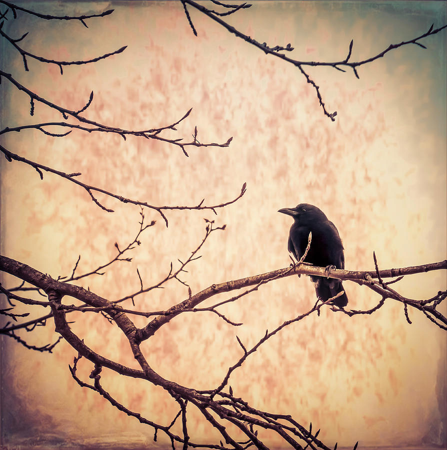 Lone Crow Contemplating the Nature of Reality by Michele Cornelius