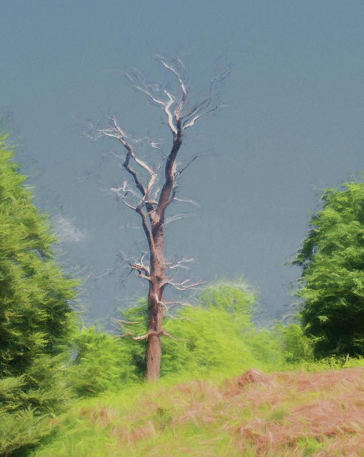 Lone Dead Tree 2 by Roy Pedersen