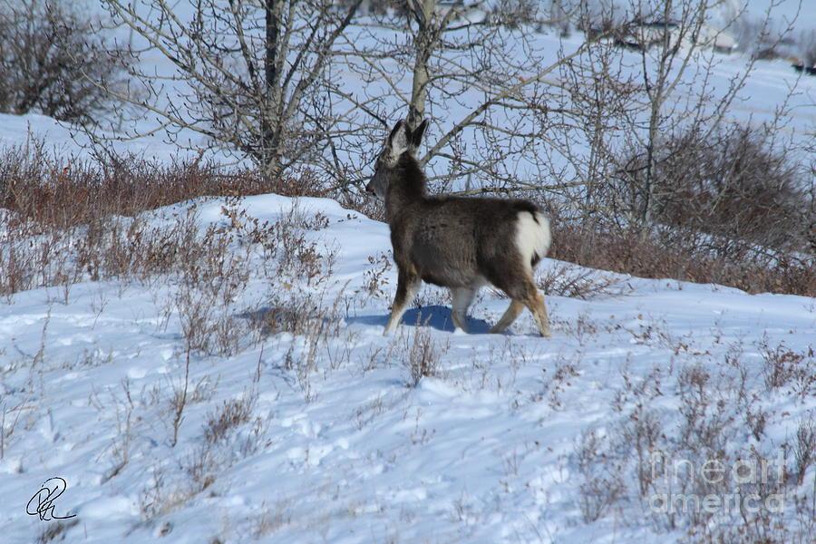 Lone Deer by Ann E Robson