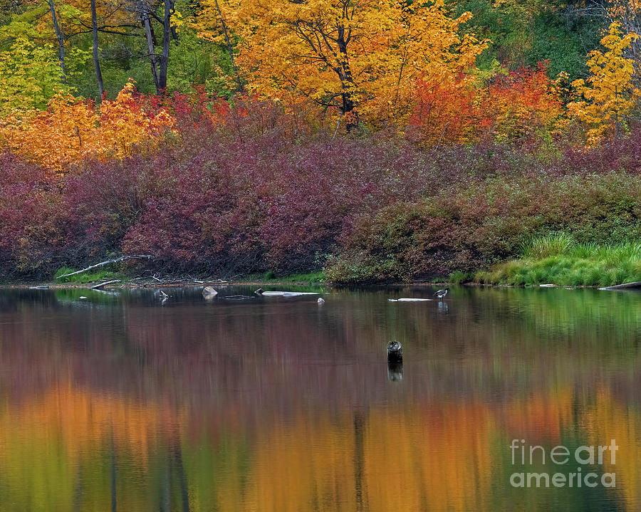 Lone Goose Autumn Photograph