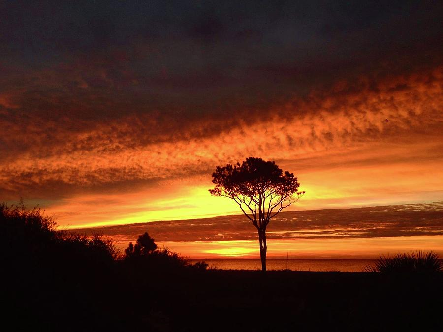Landscape Photograph - Lone Pine 1 by Michael Stothard