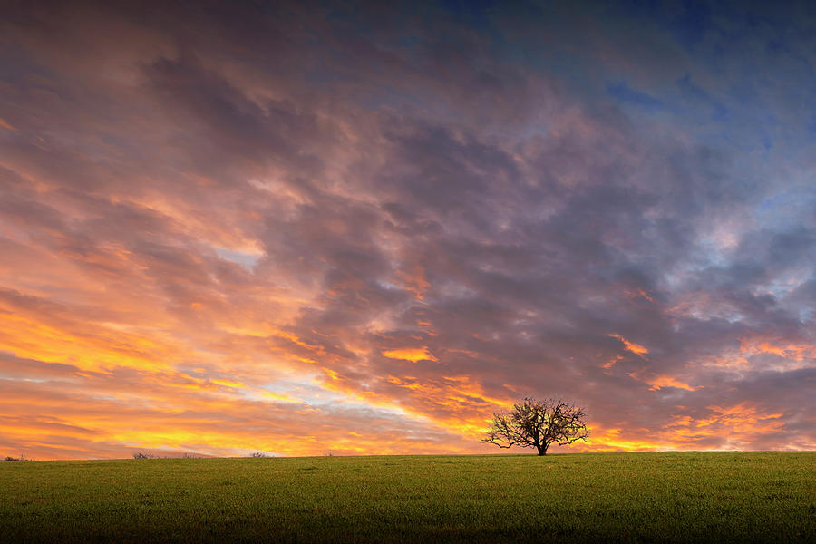 Lone Tree At Sunset In Southeast Texas Photograph