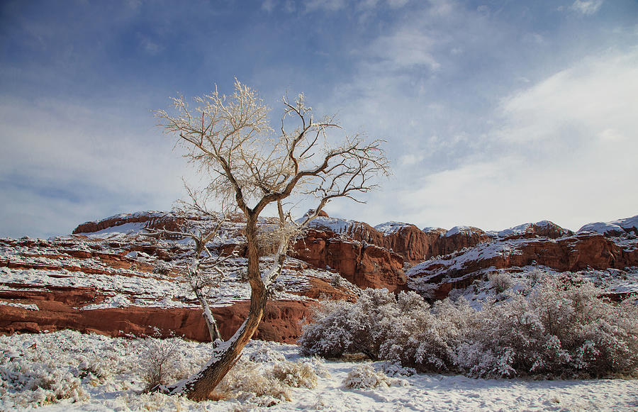 Lone Tree Covered In Fresh Snow Along The Banks Of The Coloradp River Photograph