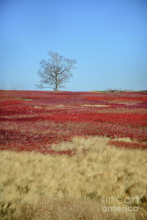 Lone Tree In A Field Photograph