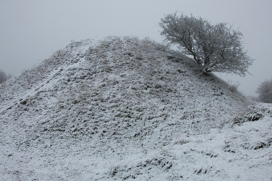 Lone Tree In Winter Photograph