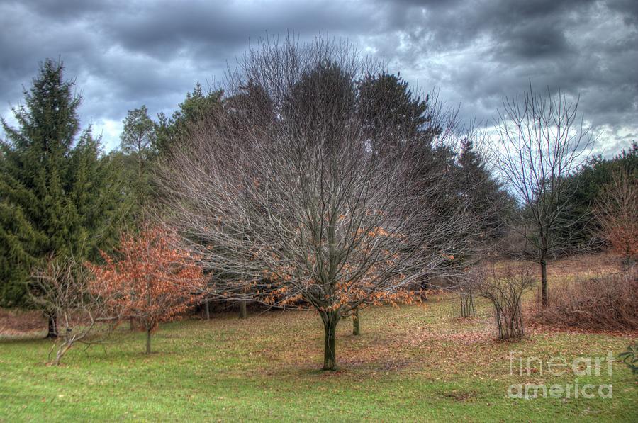 lone tree by Jim Lepard