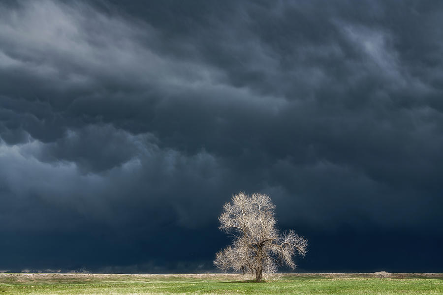 Lone Tree Tornado Warning Photograph