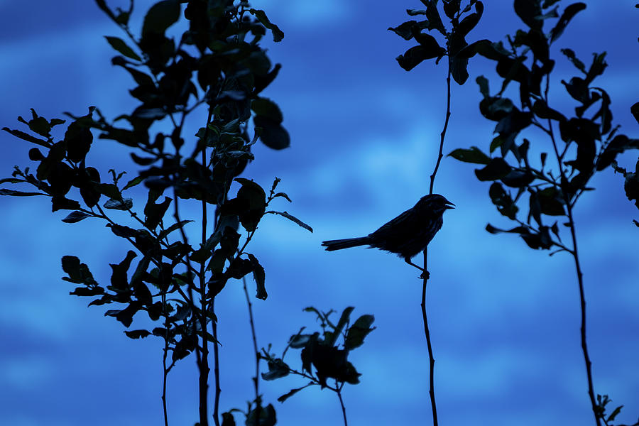 Silhouette Photograph - Lonely Bird by Linda Howes