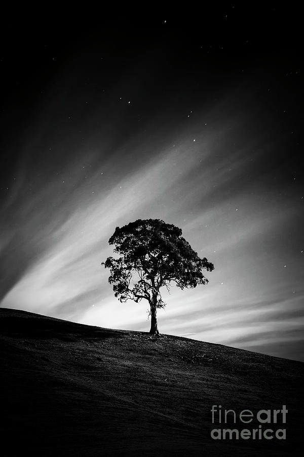 Lonely Is The Night by Evelina Kremsdorf