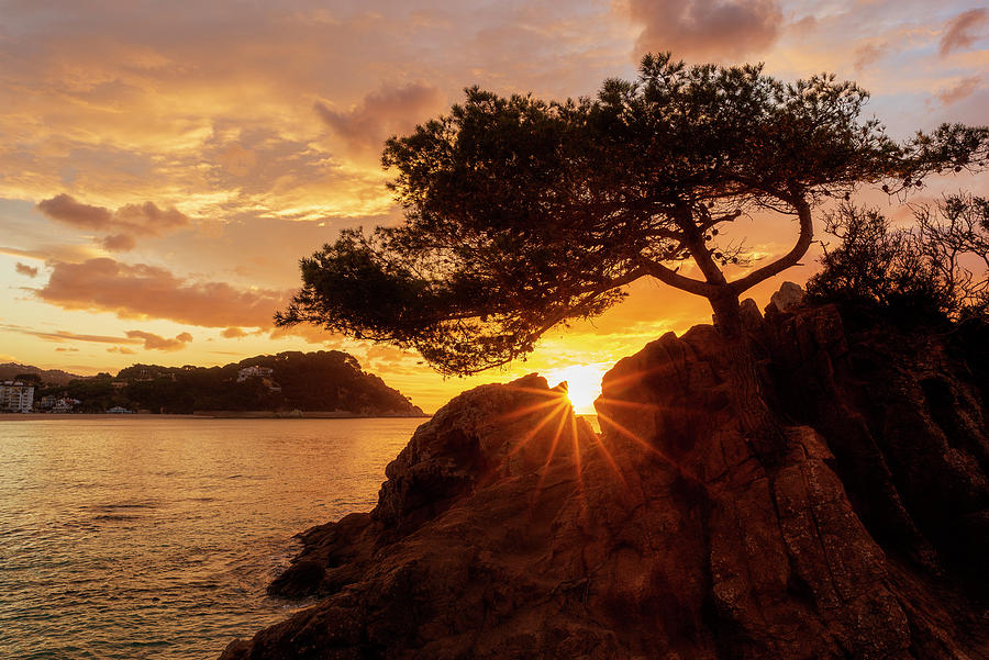 Lloret Photograph - Lonely Tree At Sunrise On The Beach Of Fenals, Lloret De Mar by Vicen Photography