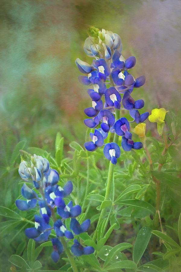 Lonestar Bluebonnet Twins 2   by Harriet Feagin