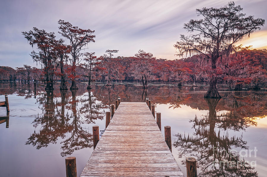 Long Exposure of Caddo Lake and Bald Cypresses from Pier - Uncertain Harrison County Northeast Texas by Silvio Ligutti