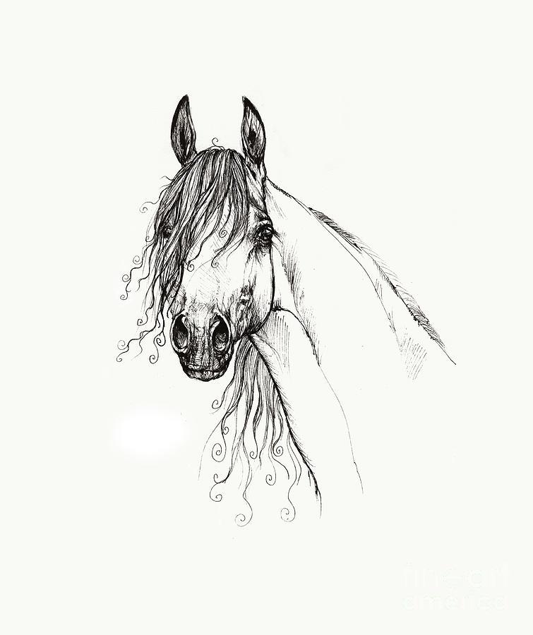 Arabian Horse Head 2011 02 14 Drawing