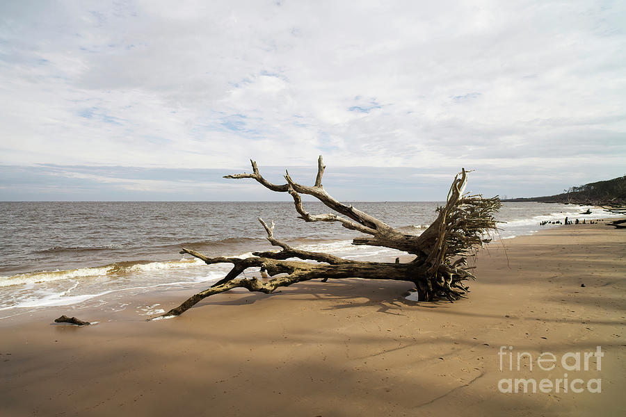 Big Talbot Island State Park Photograph - Longing To Be Free, Big Talbot Island State Park, Florida by Felix Lai