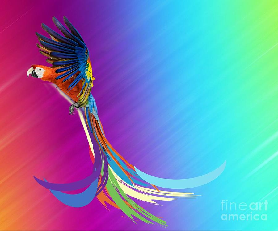 Longtail Exoctic Bird Mixed Media