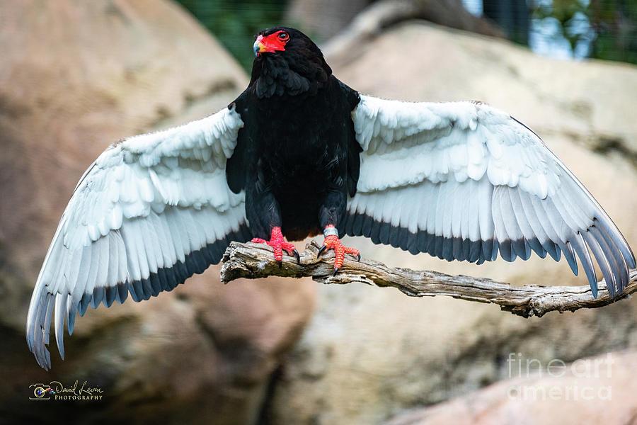 Look at My Wingspan by David Levin