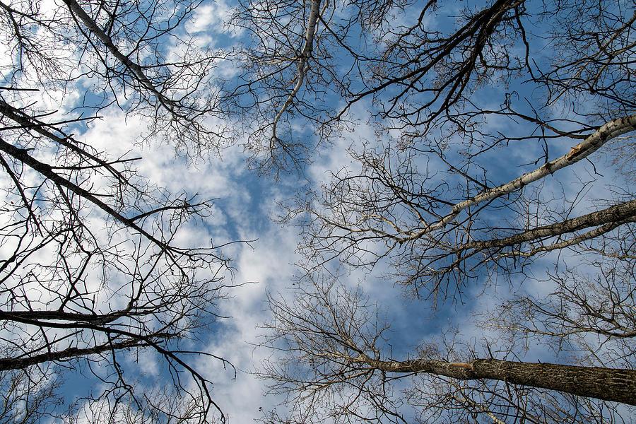 Looking Upwards by Mark Hunter