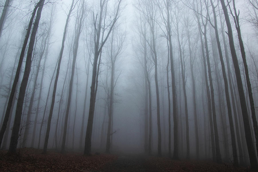 Lost In Forest Photograph