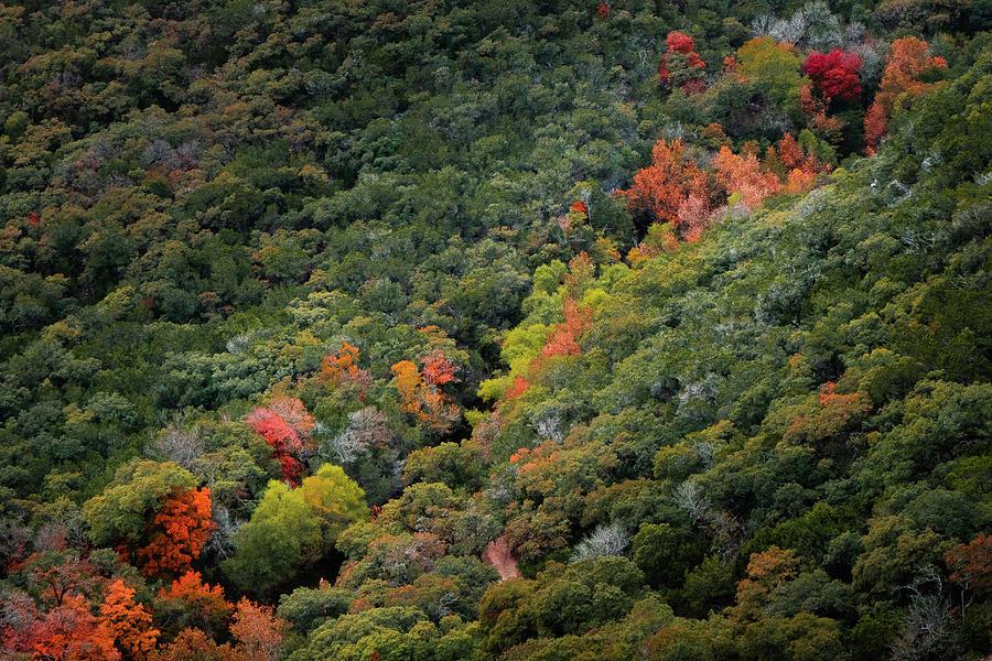 Lost Maples by Nicholas Morris
